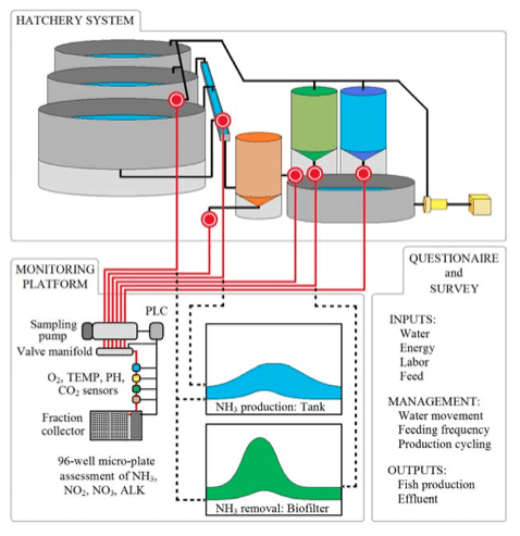 In-depth Look At Aquaculture Systems Recirculation Setup Technology