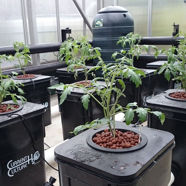 Expert Say On Undercurrent Culture Hydroponic System