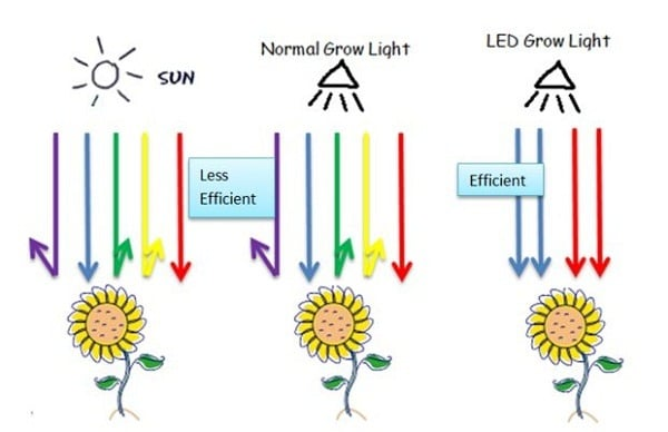 Indoor LED Grow Lights In All Levels Plant Growth Support