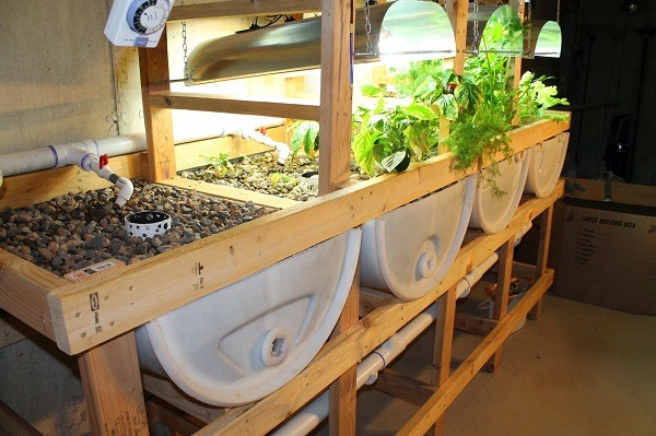 How to setup aquaponics system at home things to for Hydroponic grow bed