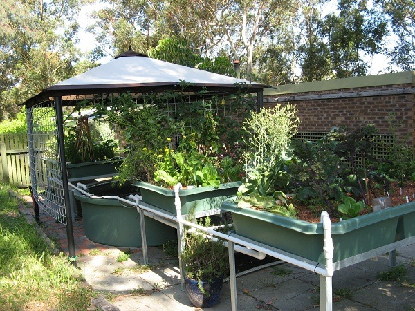 How To Setup Aquaponics System At Home Things To Consider