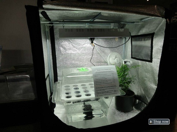 How To Grow Hydroponic Tomatoes Diy Full Detail Garden