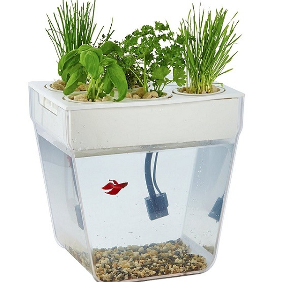 Step by step hydroponics systems gardening full tutorial for Fish tank hydroponic garden