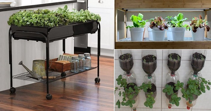 How To Start An Indoor Hydroponic Garden | Farm Hydroponics