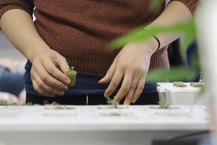 Hydroponic Garden Care and Maintenance Tips